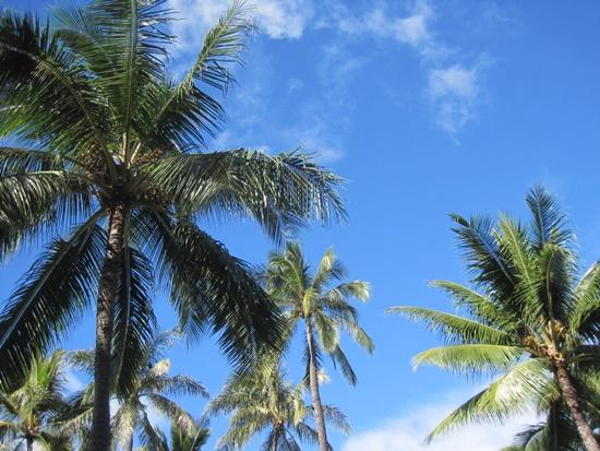 ハワイのヤシと空