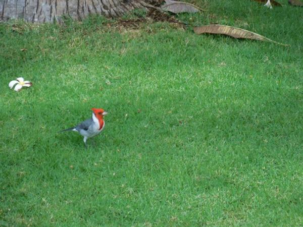 ホノルル動物園の前の緑でアーシング&リラックス